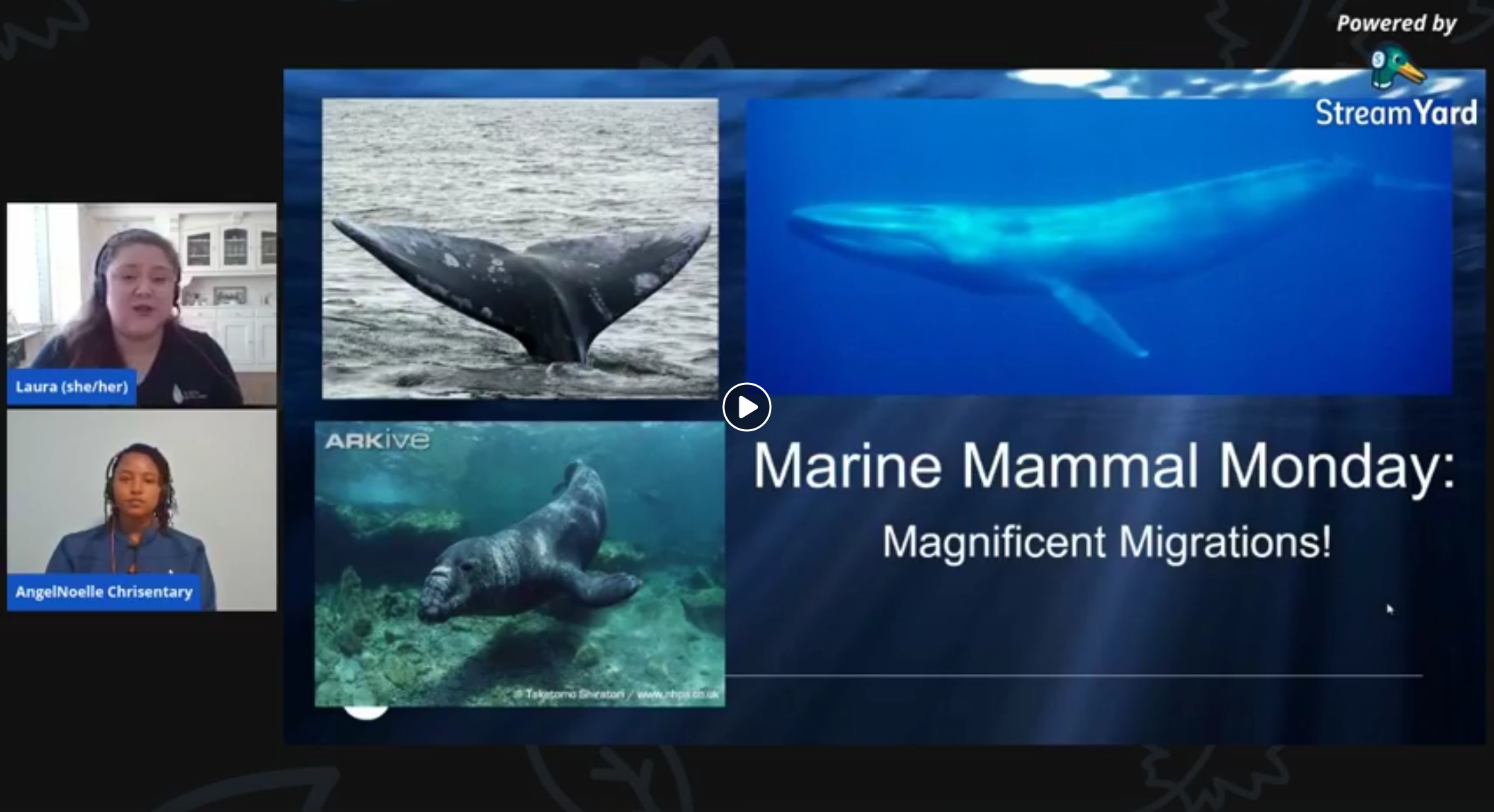 screenshot of Marine Mammal Monday: Magnificent Migrations video